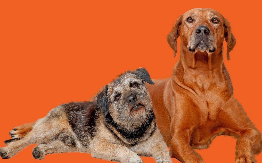 Animals | Dogs