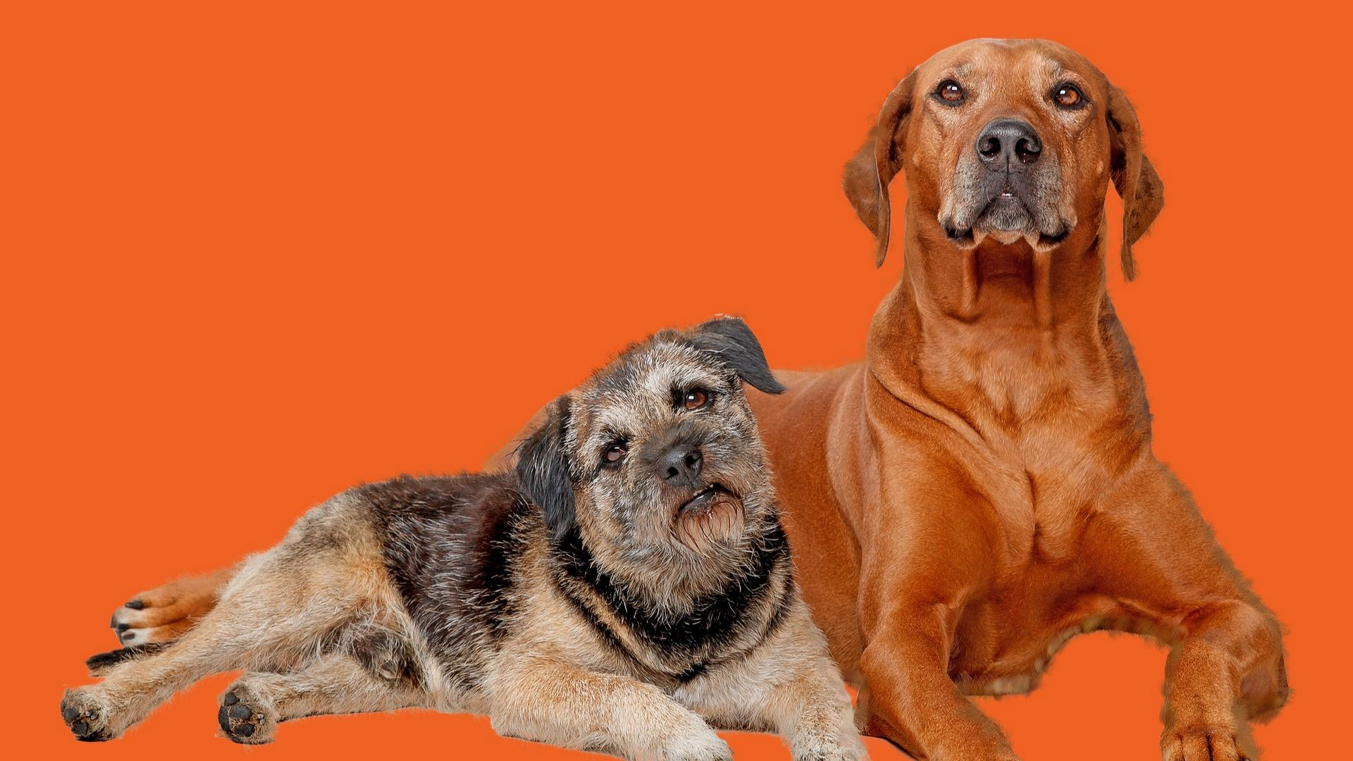 Episode-272-Animals-Dogs