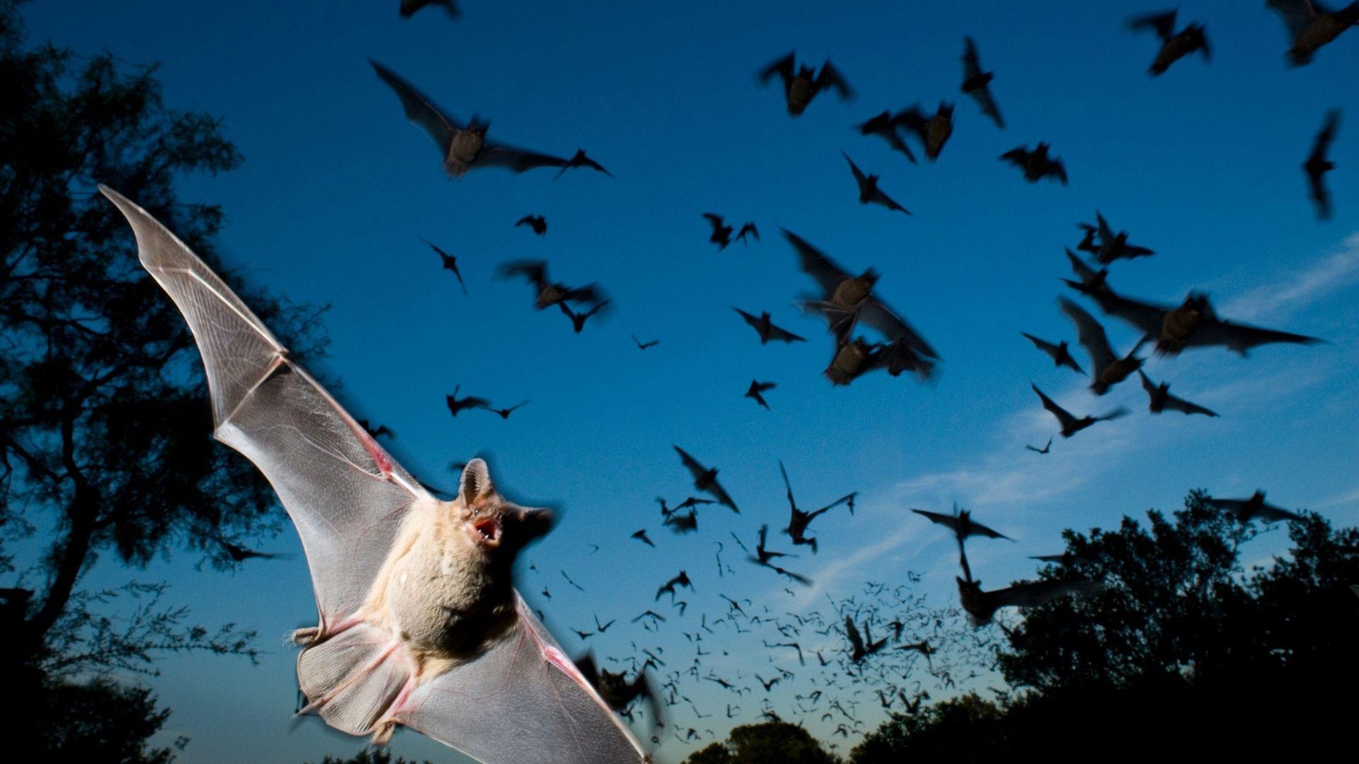 Episode-296-Listening-Animals-Bats
