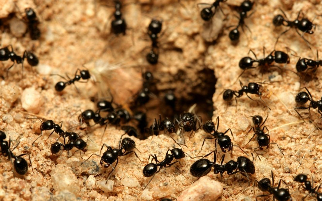 Knowledge Plus Episode 04 What Do You Know About Ants