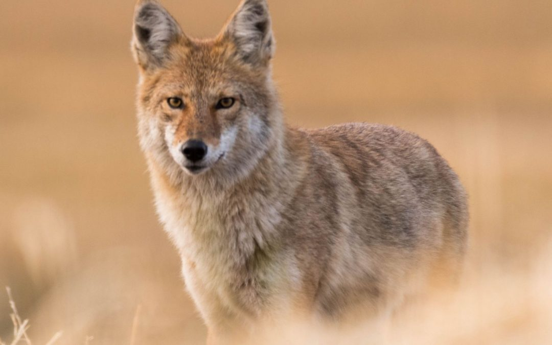 Word Power | Coyote Enters the Upper World
