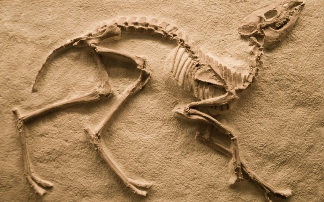 Do You Know | What Are Fossils?
