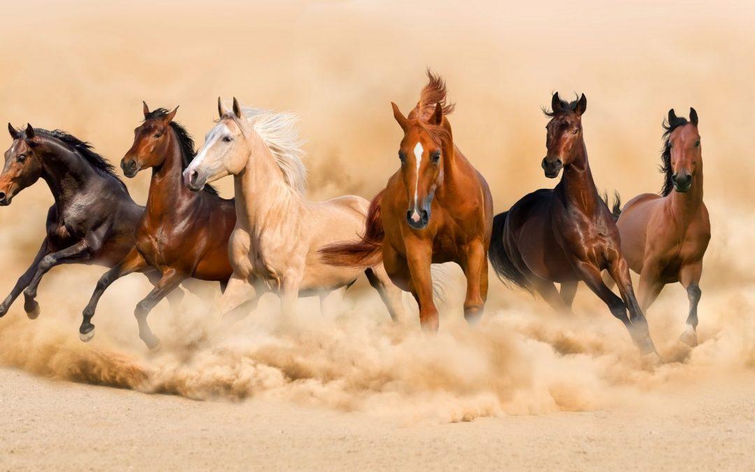 Episode 463 Do You Know Horses