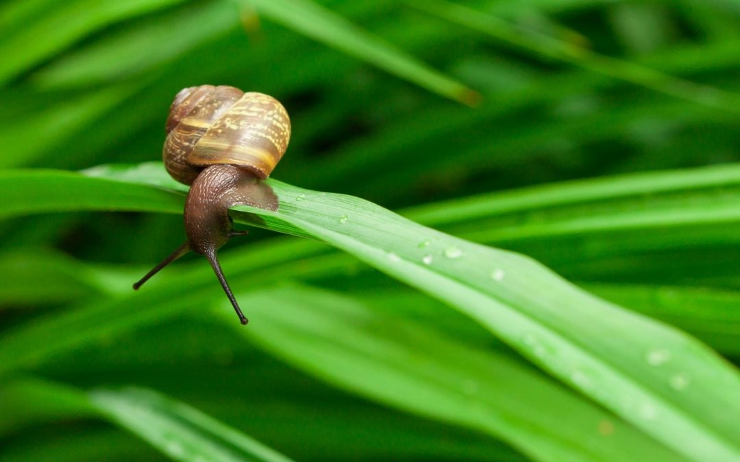 Poetry | The Snail