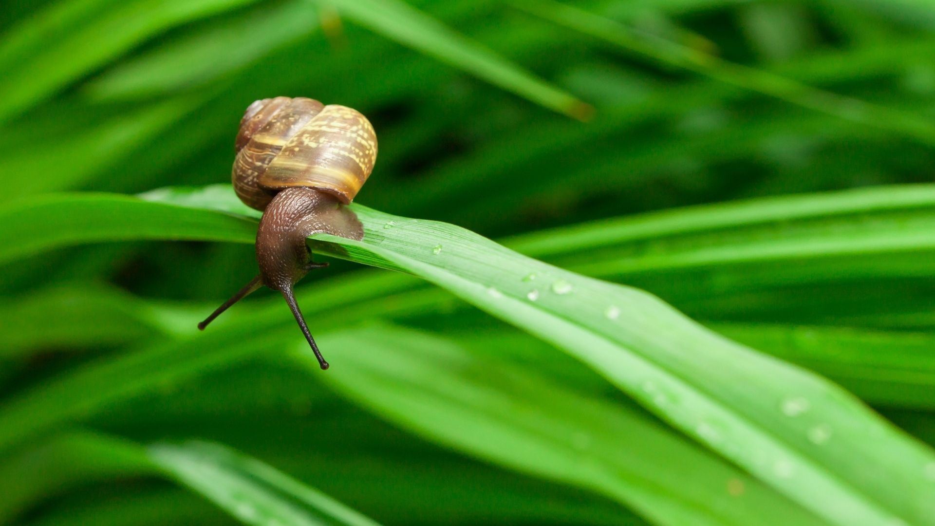 Episode 498 Poetry The Snail