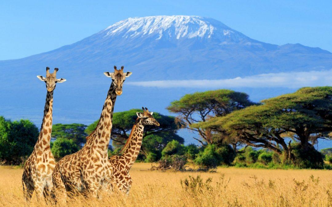 Do You Know | Giraffes