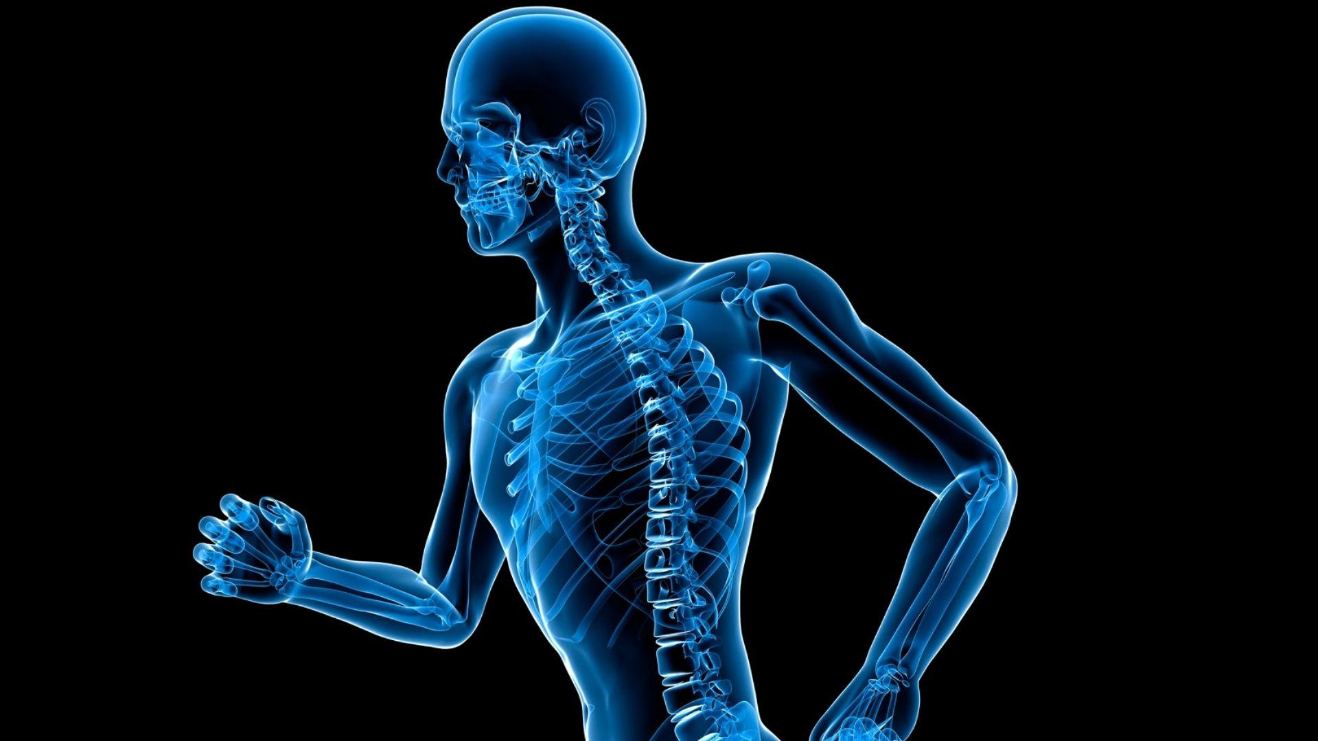 Episode 562 Do You Know - Bones and Skeleton