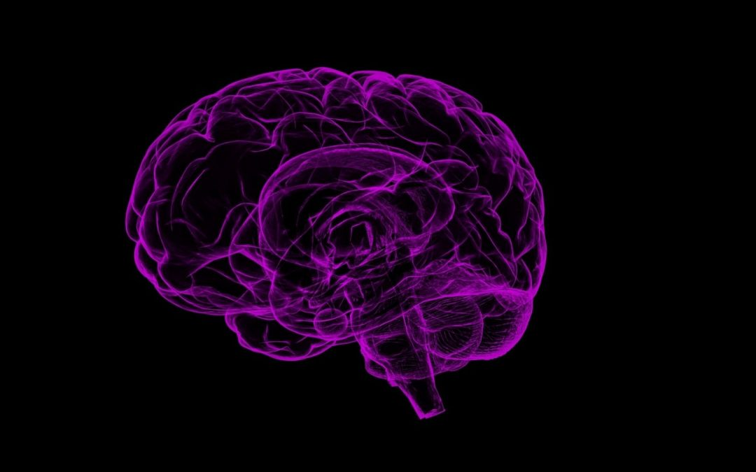 Do You Know | The Brain and Nervous System